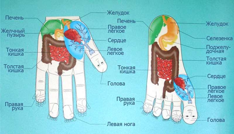 294683992_1_1000x700_kursy-igloukalyvanie-refleksoterapiya-igloterapiya-su-dzhok-terapii-dnepr...jpg